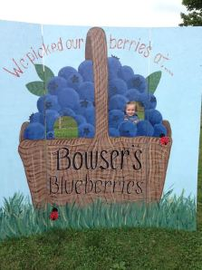 blueberryfarm1